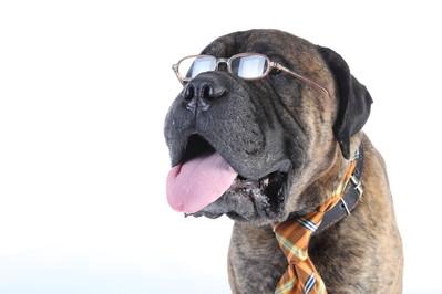 Na psi rozum