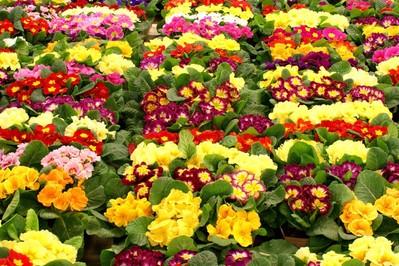 Kwiaty i ich znaczenie