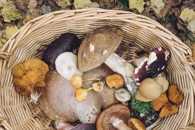 Objawy zatrucia grzybami - co Cię powinno zaniepokoić?