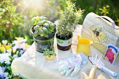 Świeże zioła w kuchni – które warto uprawiać?