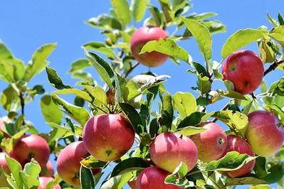 Właściwości zdrowotne najpopularniejszych owoców jesiennych