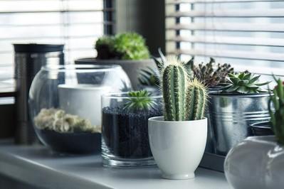 6 popularnych roślin doniczkowych oczyszczających powietrze w domu. Zobaczcie!
