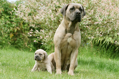 Pies i jego wiek