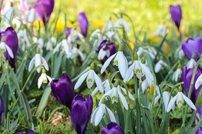Pierwszy dzień wiosny! ZWYCZAJE staropolskie i te nowoczesne
