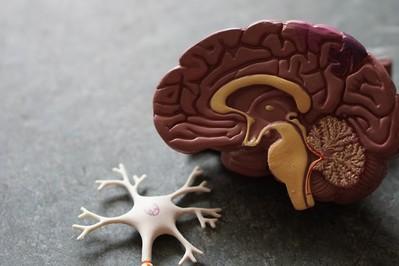 Co zapamięta mózg niemowlaka w pierwszym roku życia?