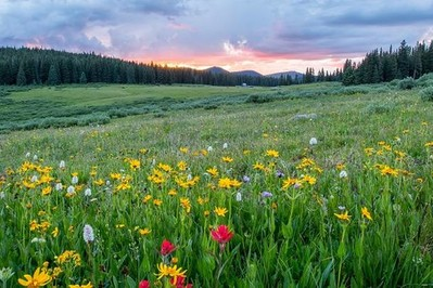 Kalendarz pylenia 2021: co pyli w czerwcu – omijajcie trawy i zboża