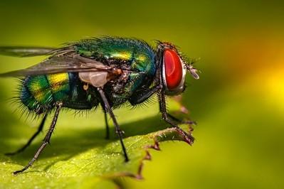 Naturalne sposoby na muchy polecane przez mamy