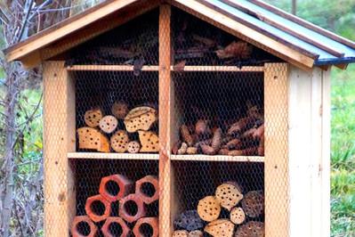 Domki dla owadów - po co budować je w ogrodzie?