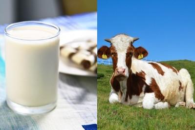 Czy Twoje dziecko wie jak wygląda krowa?