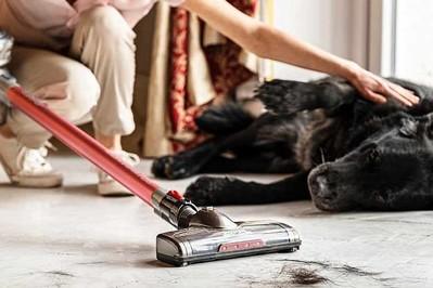 Pies w domu: jak sobie poradzić z wiosennym linieniem?