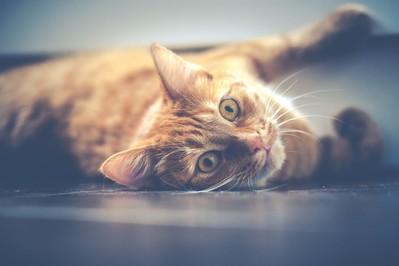 Zwierzę w domu. Czy warto sprawić dziecku kotka?