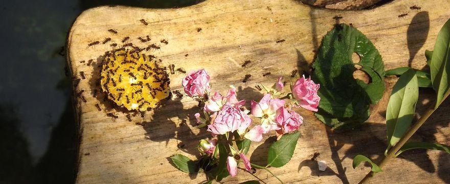 Sposób na mrówki w domu – jak się ich pozbyć?