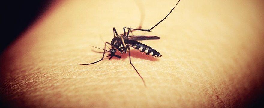 Czy polskie komary przenoszą choroby? Czy dolegliwe jest tylko swędzenie, gdy ukąszą?