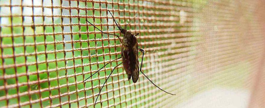 Naturalne sposoby na ukąszenia komarów i innych owadów