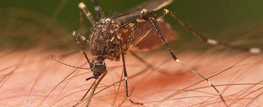 Skuteczne i tanie sposoby na komary
