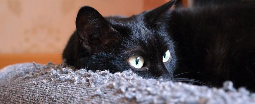 Drapak dla kota - jak wybrać? Wskazówki