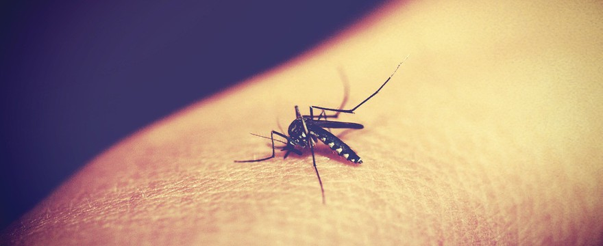 Co na komary? Domowe sposoby bezpieczne dla dzieci