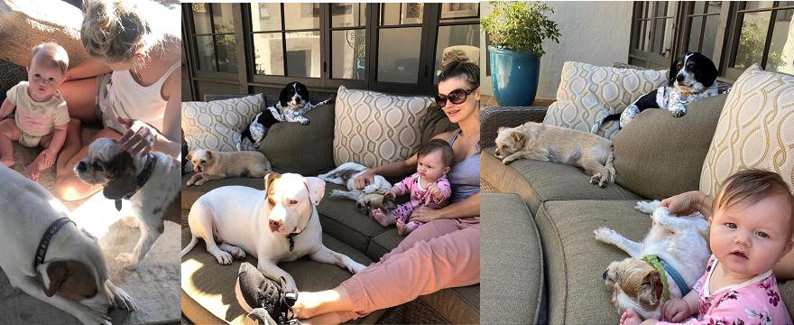 Joanna Krupa pokazała zdjęcie córeczki z psem Winstonem: fani Dżoany są zachwyceni bo Asha Leigh wygląda na szczęśliwą