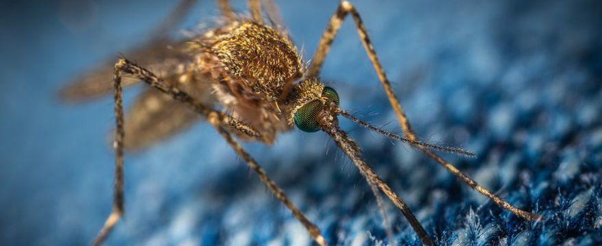 Uczulenie na komary? Alergia na ich ugryzienia jest możliwa!