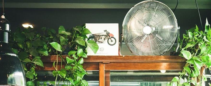 Jak ochłodzić pokój i mieszkanie: darmowe sposoby na upał