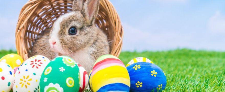 Przepisy na Wielkanoc - TOP 7 PYSZNYCH POTRAW!
