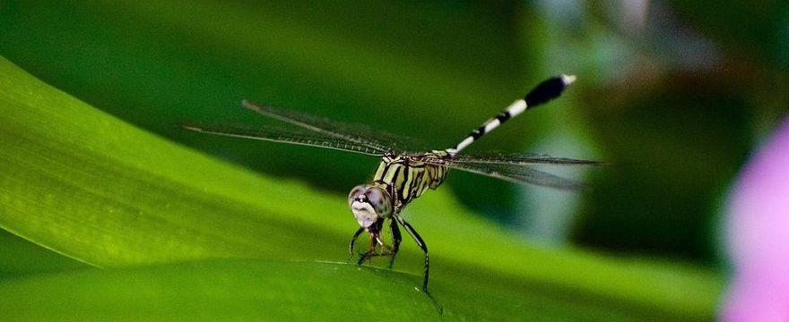 Co na kleszcze i komary? Rozwiąż QUIZ i wygraj skuteczne preparaty!