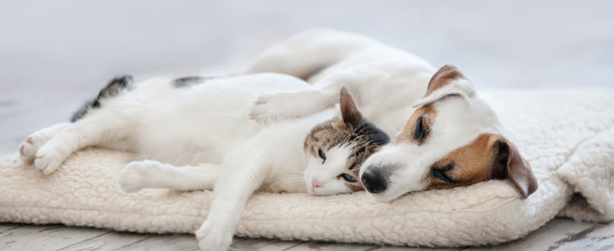 Jak wzmacniać odporność zwierząt domowych?