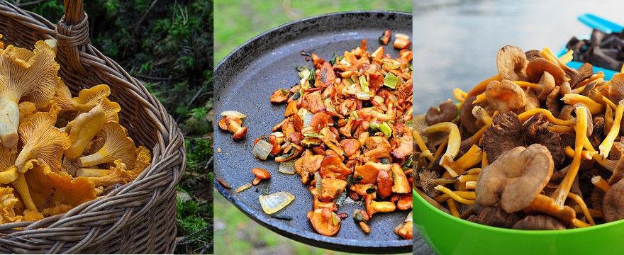 Sezon na kurki rozpoczęty: Przepisy na kurki