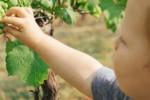 Jak tworzyć zdrowe nawyki żywieniowe u dzieci?