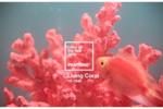 Living Coral: kolor roku 2019 według Pantone. Koralowy optymizm, świeżość i energia