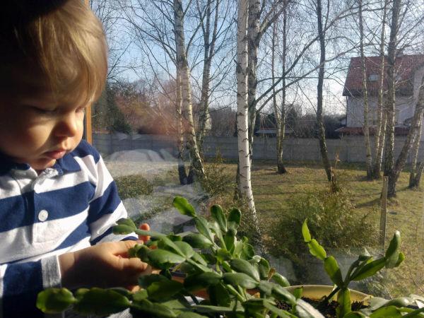 Antoni Szczęsny, wiek 1 rok