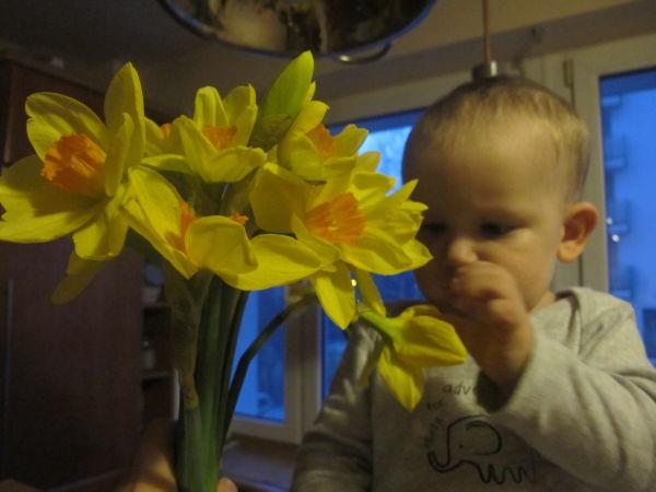 Wąchamy, sprawdzamy, dotykamy :) - pierwszy kontakt z kwiatami 10 miesięcznego Maksa