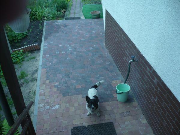 Lili prosi aby wejoa do domu.JPG